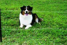Clôture électrique pour chien
