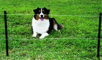 Collier pour chien, notre guide d'achat Bazarovore