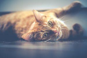 Guide des meilleurs produits pour chat - Jaimecomparer