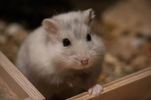 Guide des meilleurs produits pour hamster - Jaimecomparer
