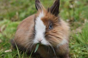 Guide des meilleurs produits pour lapin - Jaimecomparer