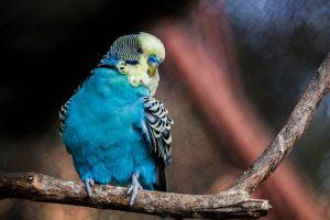 Guide des meilleurs produits pour oiseau - Jaimecomparer