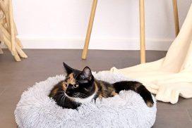 Panier chat